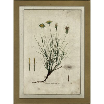 Botanical V Framed Graphic Art