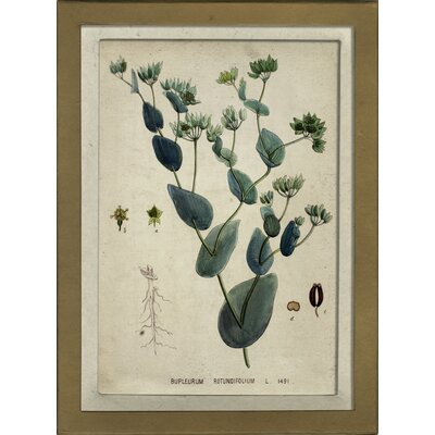 Botanical VII Framed Graphic Art