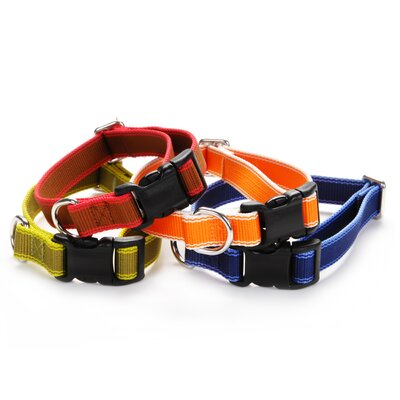 Waggo Stripe Hype Dog Collar