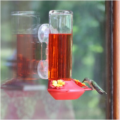 Window Mounted Glass Hummingbird Feeder