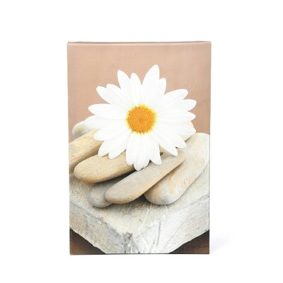 Elena Ray 'Daisy and Stones' Gallery-Wrapped Canvas Wall Art