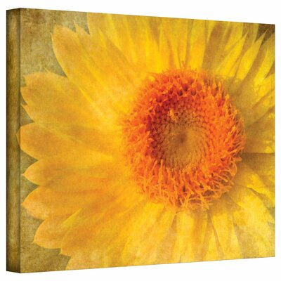 David Liam Kyle 'Flowers in Focus I' Gallery-Wrapped Canvas Wall Art