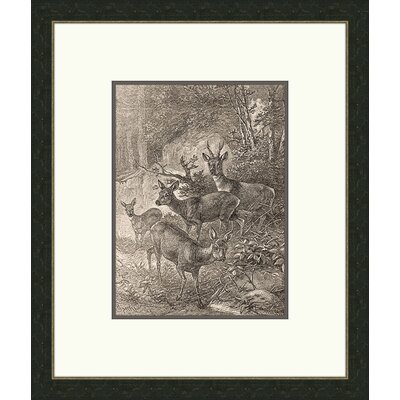 Forest Dwellers lV Framed Graphic Art
