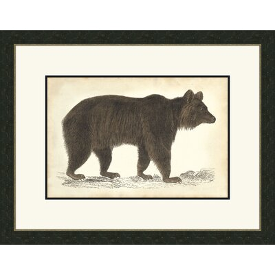 Bear ll Framed Graphic Art