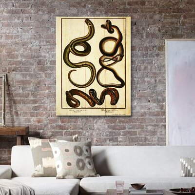 Oliver Gal ''Snakes II'' Graphic Art on Canvas