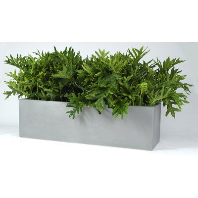 Allied Molded Products Cannon Rectangle Planter