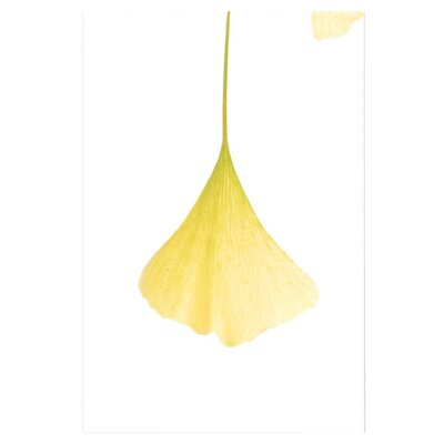 Trademark Fine Art 'Ginko Leaf in the Sun' by Kurt Shaffer Photographic Print on Canvas