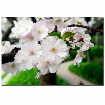 Trademark Fine Art 'Cherry Blossom Path' by Kurt Shaffer Photographic Print on Canvas