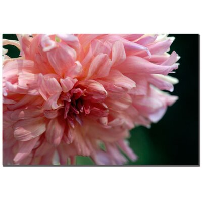 "Trademark Fine Art ""Pink Dhalia"" by Kurt Shaffer Photographic Print on Canvas"