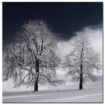 "Trademark Fine Art White Nature by Philippe Sainte-Laudy, Canvas Art - 24"" x 24"""