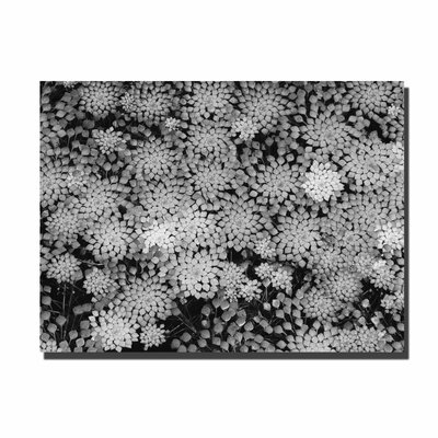 "Trademark Fine Art Pattern on a Pond II by Kurt Shaffer, Canvas Art - 35"" x 47"""