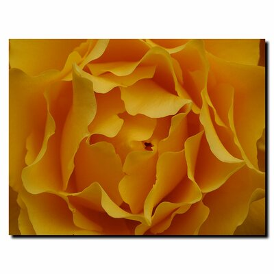 "Trademark Fine Art Hypnotic Yellow Rose by Kurt Shaffer, Canvas Art - 35"" x 47"""