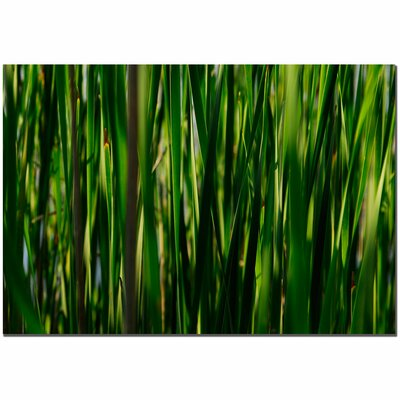 Trademark Fine Art 'Prairy Grass II' by Kurt Shaffer Photographic Print on Canvas