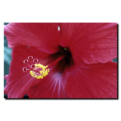 "Trademark Fine Art Into The Hibiscus by Kurt Shaffer, Canvas Art - 24"" x 32"""