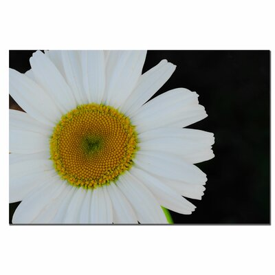 "Trademark Fine Art Daisies on Black II by Kurt Shaffer, Canvas Art - 16"" x 24"""
