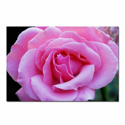 Trademark Fine Art 'Pink and Beautiful' by Kurt Shaffer Photographic Print on Canvas