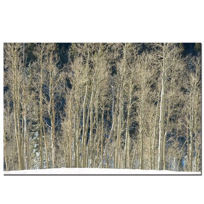 "Trademark Fine Art Aspen Snow by Aiana, Canvas Art - 16"" x 24"""