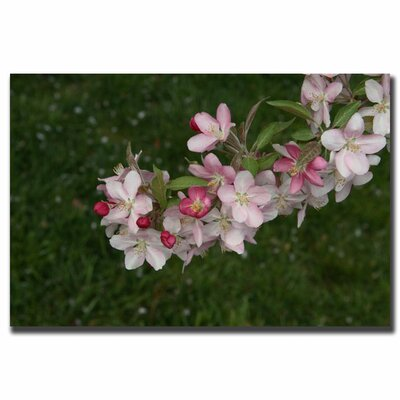 "Trademark Fine Art ""Pink Flowers"" by Cary Hahn Photographic Print on Canvas"