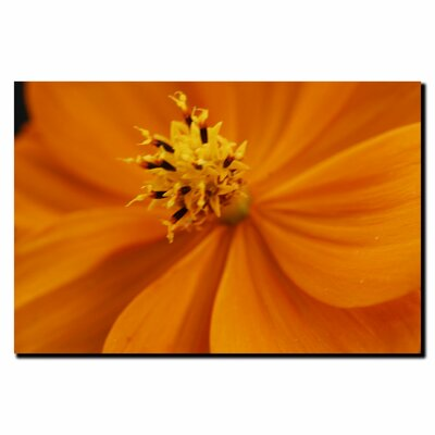 "Trademark Fine Art ""Orange Flower"" by Kurt Shaffer Photographic Print on Canvas"