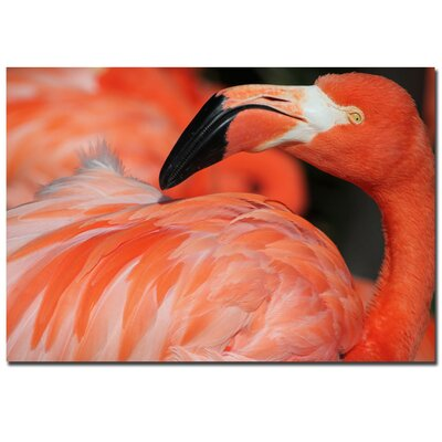 "Trademark Fine Art ""Pink Flamingo"" by Patty Tuggle Photographic Print on Canvas"