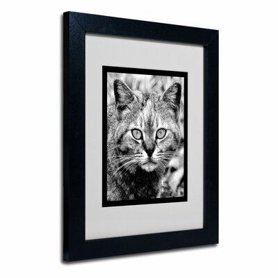 trademark art black and white pretty kitty matted framed art