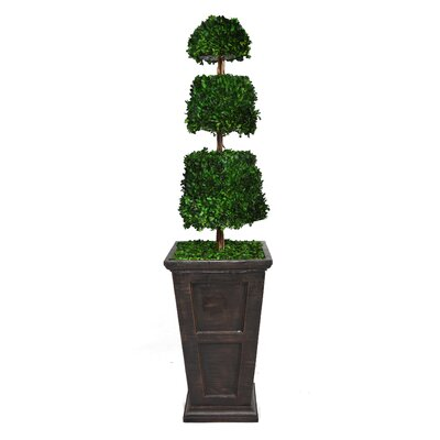 Tall Preserved Spiral Boxwood Cone Topiary in Fiberstone Planter