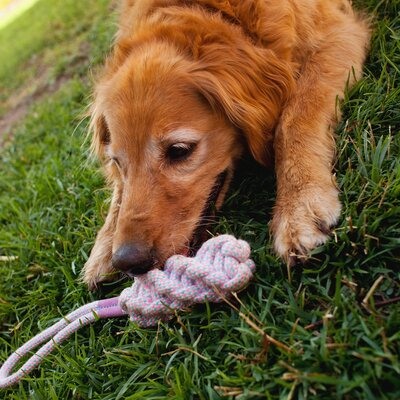 Tugga Rope Toy