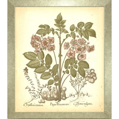 Floral Living Besler Botanica 3 Framed Graphic Art