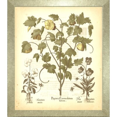 Floral Living Besler Botanica 4 Framed Graphic Art