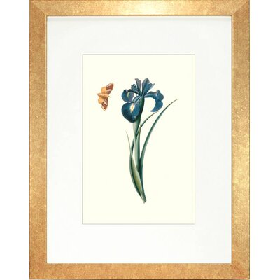 Floral Living Flora and Fauna II Framed Graphic Art