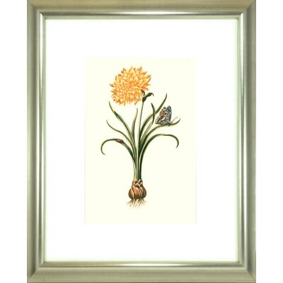 Floral Living Flora and Fauna III Framed Graphic Art