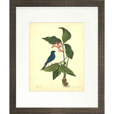 Floral Living Catesby Bird and Botanical IV Framed Wall Art
