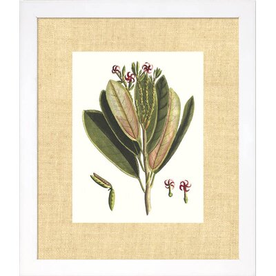Floral Living Buchoz Leaves I Framed Graphic Art