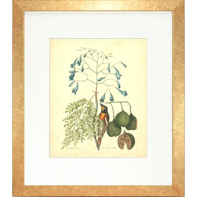 Floral Living Catesby Bird and Botanical II Framed Graphic Art