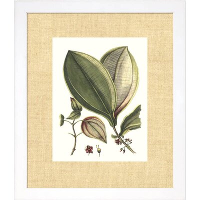 Floral Living Buchoz Leaves V Framed Graphic Art