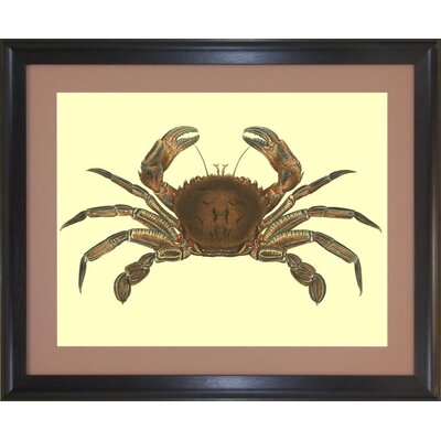 Seaside Living Antique Crab II Framed Wall Art