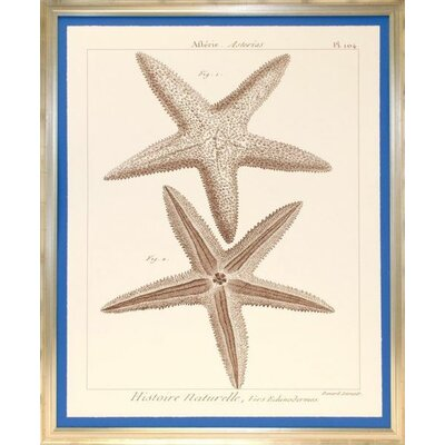 Indigo Avenue Seaside Living Striking Starfish I Framed Wall Art