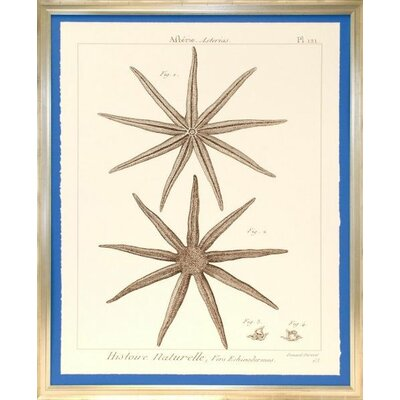 Seaside Living Striking Starfish III Framed Wall Art