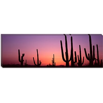 iCanvasArt Saguaro National Park, Tucson, Pima County, Arizona Canvas Wall Art