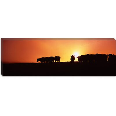 iCanvasArt Silhouette of Cows at Sunset, Point Reyes National Seashore, California Canvas Wall Art