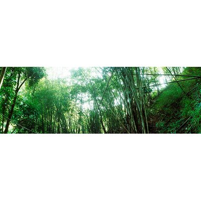 iCanvasArt Panoramic Bamboo Forest, Chiang Mai, Thailand Photographic Print on Canvas
