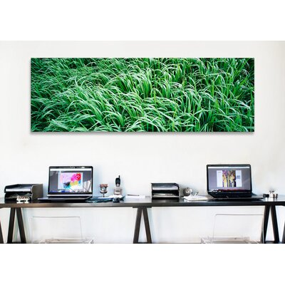 iCanvasArt Panoramic High Angle View of Grass Montana Photographic Print on Canvas