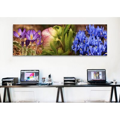 iCanvasArt Panoramic Details of Crocus Flowers Photographic Print on Canvas