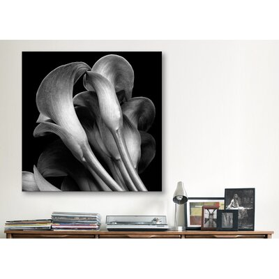 "iCanvasArt ""Lillies"" Canvas Wall Art by Michael Harrison"