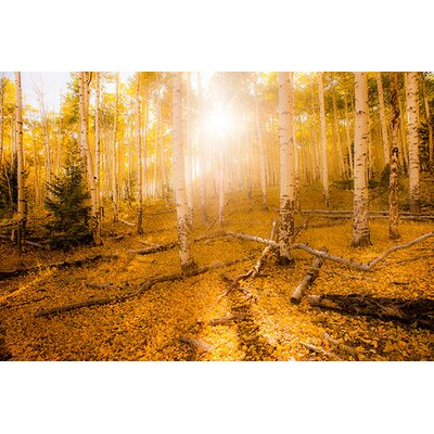 iCanvasArt 'Fall Light' by Dan Ballard Photographic Print on Canvas