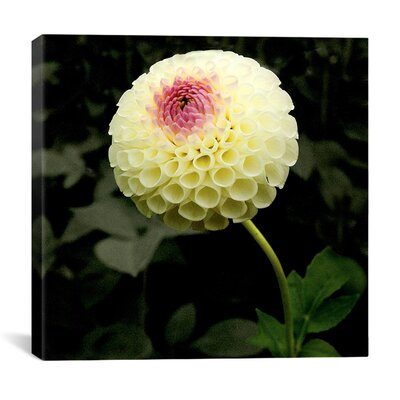 """iCanvasArt """"Special Flowers Garden"""" Canvas Wall Art by Harold Silverman"""
