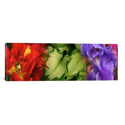 iCanvasArt Panoramic Tulip and Iris Flowers Photographic Print on Canvas