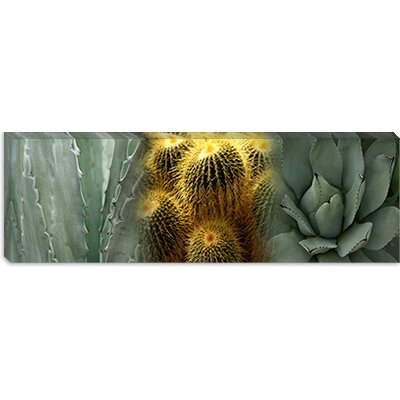 iCanvasArt Cactus Plants Canvas Wall Art