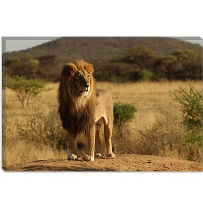iCanvasArt African Lion Canvas Wall Art
