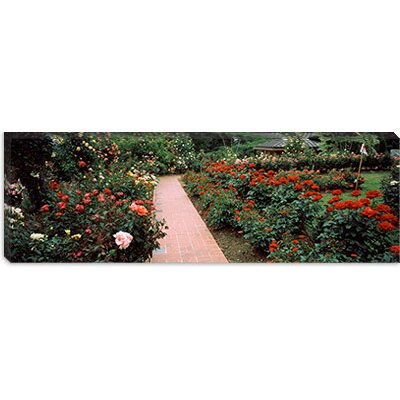 iCanvasArt International Rose Test Garden, Washington Park, Portland Canvas Wall Art